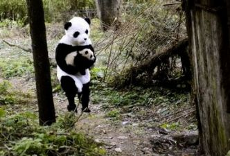 Read Scientists dress up as Pandas to save Pandas